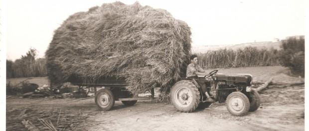 Granja Pifarré, tractor Bugartz (1957)